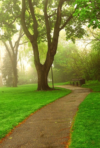 Path in a green foggy park in the spring : Stock Photo