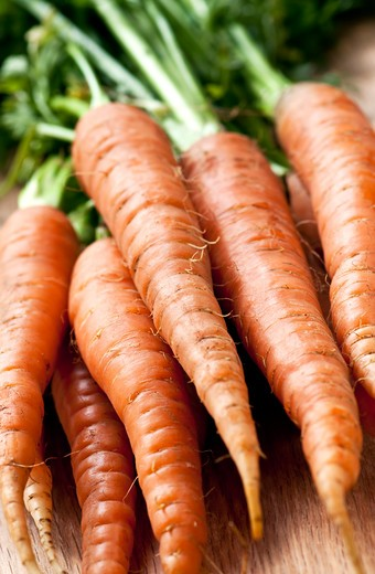 Stock Photo: 4286R-4576 Bunch of whole fresh organic orange carrots