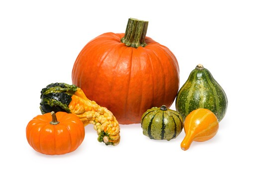 Stock Photo: 4286R-7683 Pumpkin and gourds