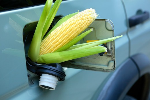 Stock Photo: 4286R-8930 Corn sticking out of gas tank