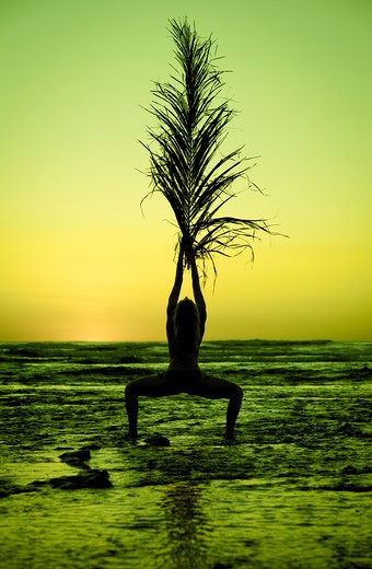 Person holding palm frond on beach at sunset. : Stock Photo