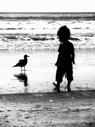 Little boy investigates seagull at beach. : Stock Photo