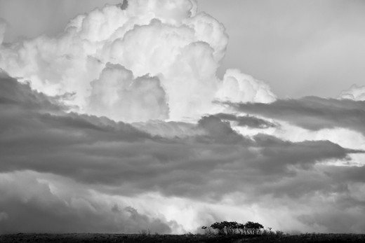Stock Photo: 4288-1699 Cumulonimbus stormclouds over the prairie.