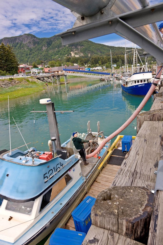 Commercial salmon fisherman loading crushed ice into his boat in order to keep his catch from spoiling, Haines Boat Harbour, Haines, Southeast Alaska, Summer : Stock Photo