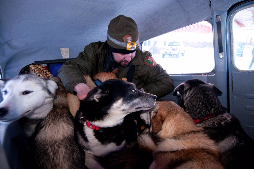 Stock Photo: 4289-11734 National Park Service Ranger loads his dog team into a plane for transport to base camp in Gates of the Arctic National Park & Preserve, Arctic Alaska, Winter