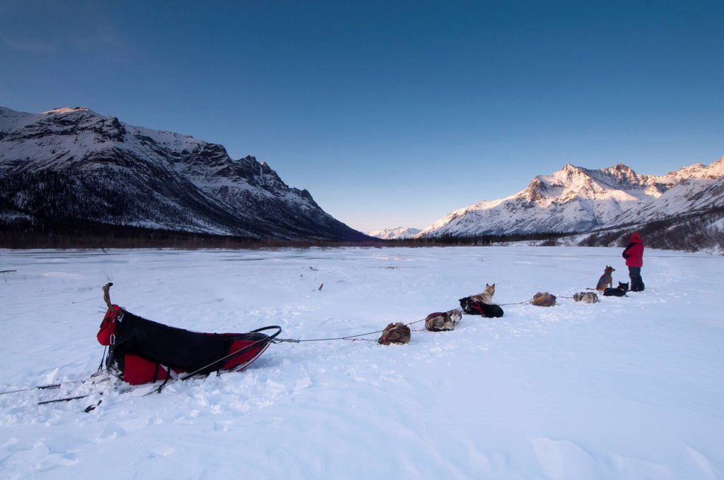 Stock Photo: 4289-11741 National Park Ranger rests with his dog team on the North Fork of the Koyukuk River at sunset with the Gates of the Arctic in the background, Brooks Range, Arctic Alaska, Winter