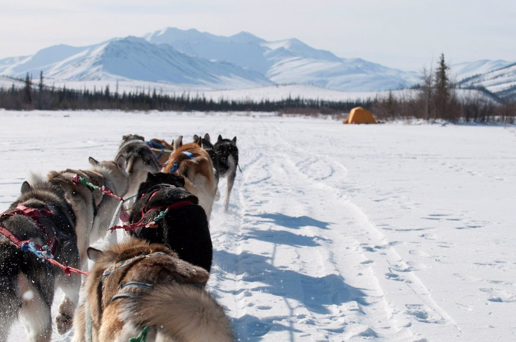 Stock Photo: 4289-11749 Musher´s perspective while mushing back to base camp on the North Fork of the Koyukuk River in Gates of the Arctic National Park & Preserve, Arctic Alaska, Winter