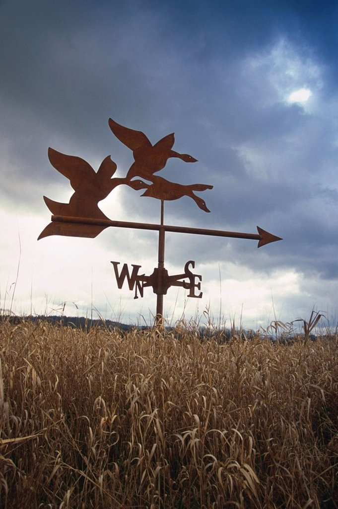 Weather vane in tall grass early spring USA : Stock Photo