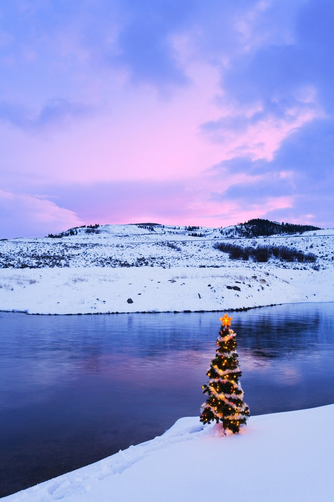 Decorated Christmas tree on shoreline of Blue Mesa Reservoir Curecanti Nat Rec Park Southwest CO Winter : Stock Photo
