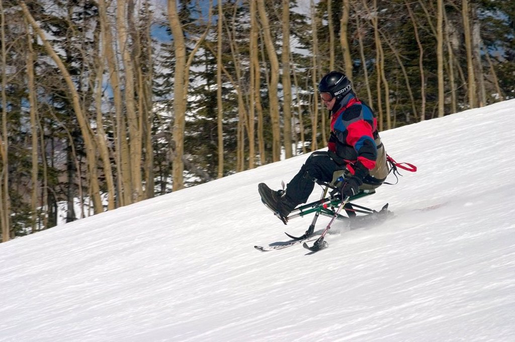 Mono_skier skiing down slope at ski_camp in Telluride Colorado : Stock Photo