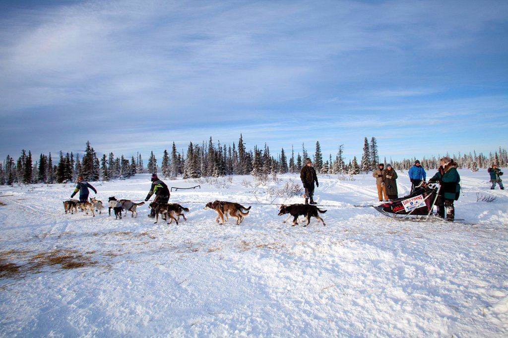 2012 Tustumena 200 Sled Dog Race at McNeil Canyon Elementary School near Homer, Kenai Peninsula, Southcentral Alaska, Winter : Stock Photo