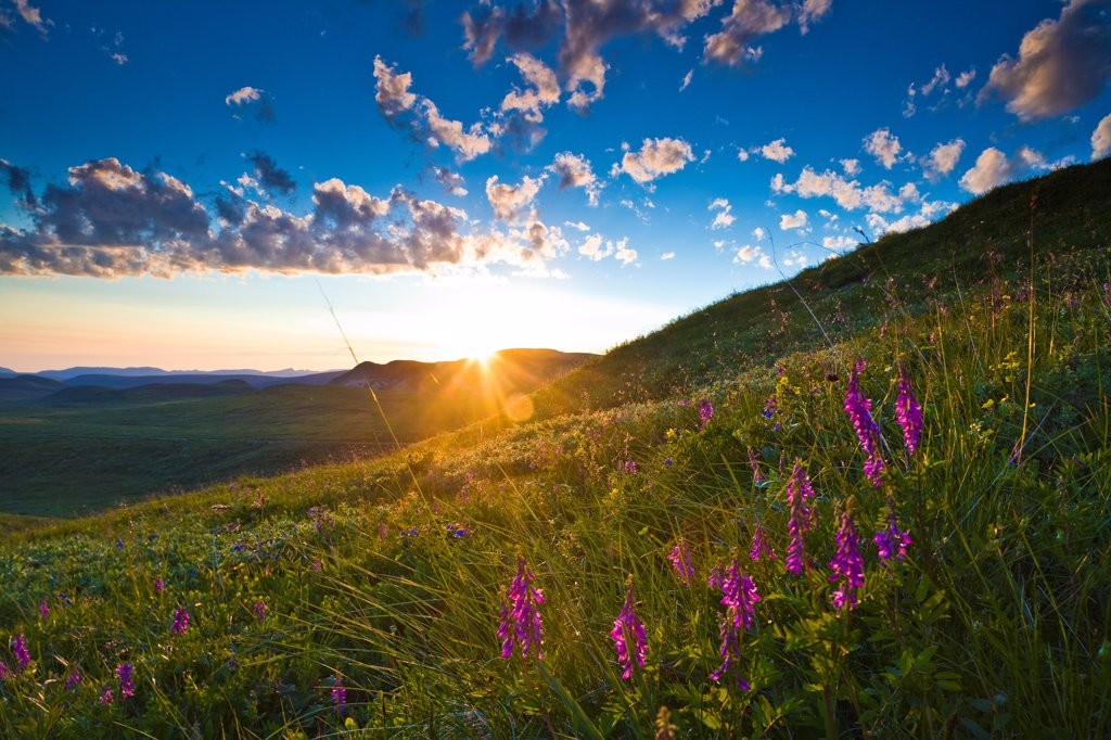 Stock Photo: 4289-13356 Midnight sunset at Grassy Pass with Eskimo potato wildflowers in the foreground, Denali National Park & Preserve, Interior Alaska, Summer