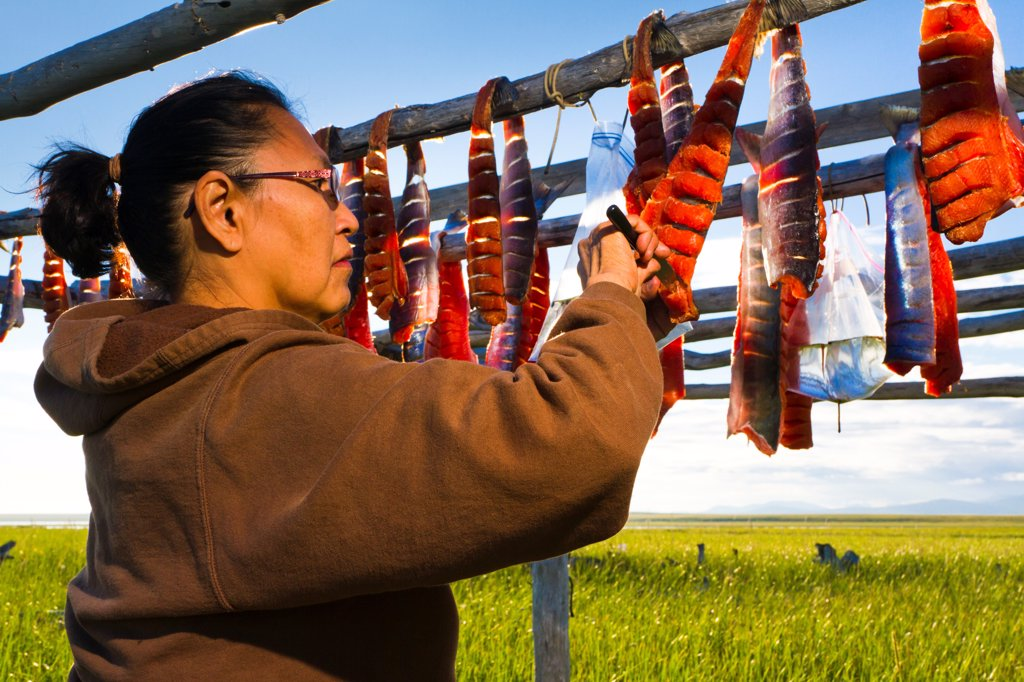 Stock Photo: 4289-13404 Inupiat woman tending to humpy salmon drying on rack, Safety Sound, Nome, Arctic Alaska, Summer