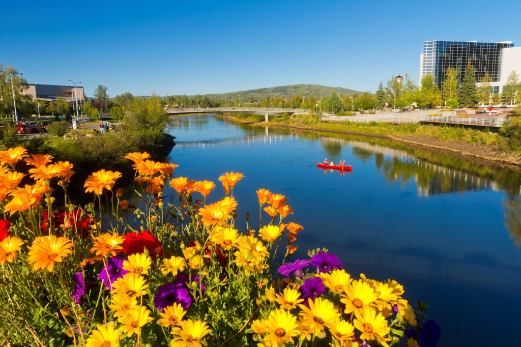 Visitors canoeing on the Chena River in downtown Fairbanks, Interior Alaska, Summer : Stock Photo