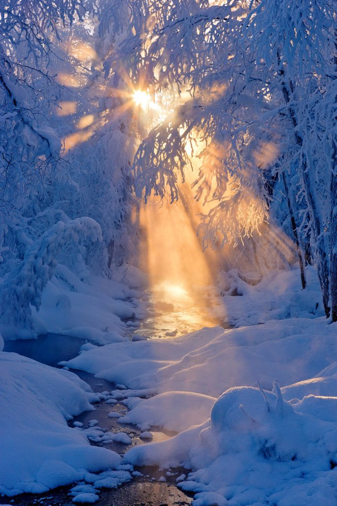 Stock Photo: 4289-13760 Small stream in a hoarfrost covered forest with rays of sun filtering through the fog in the background, Russian Jack Springs Park, Anchorage, Southcentral Alaska. Digitally enhanced.