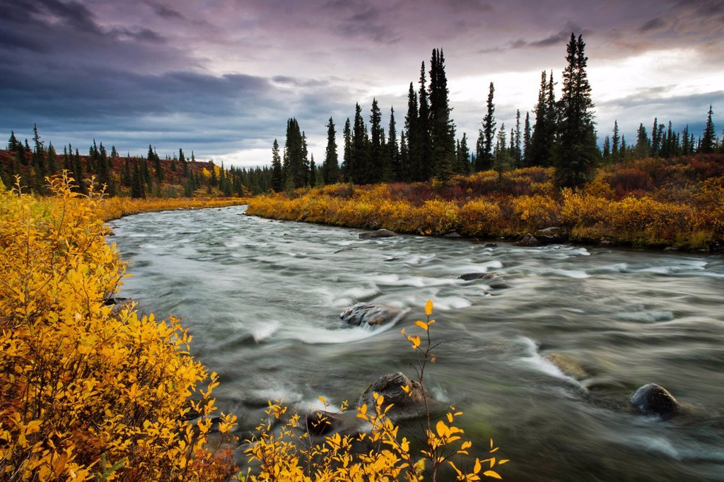 Stock Photo: 4289-14073 View of Brushkana Creek in the early morning with yellow fall colors along the creek, Denali Highway, Southcentral Alaska, Autumn