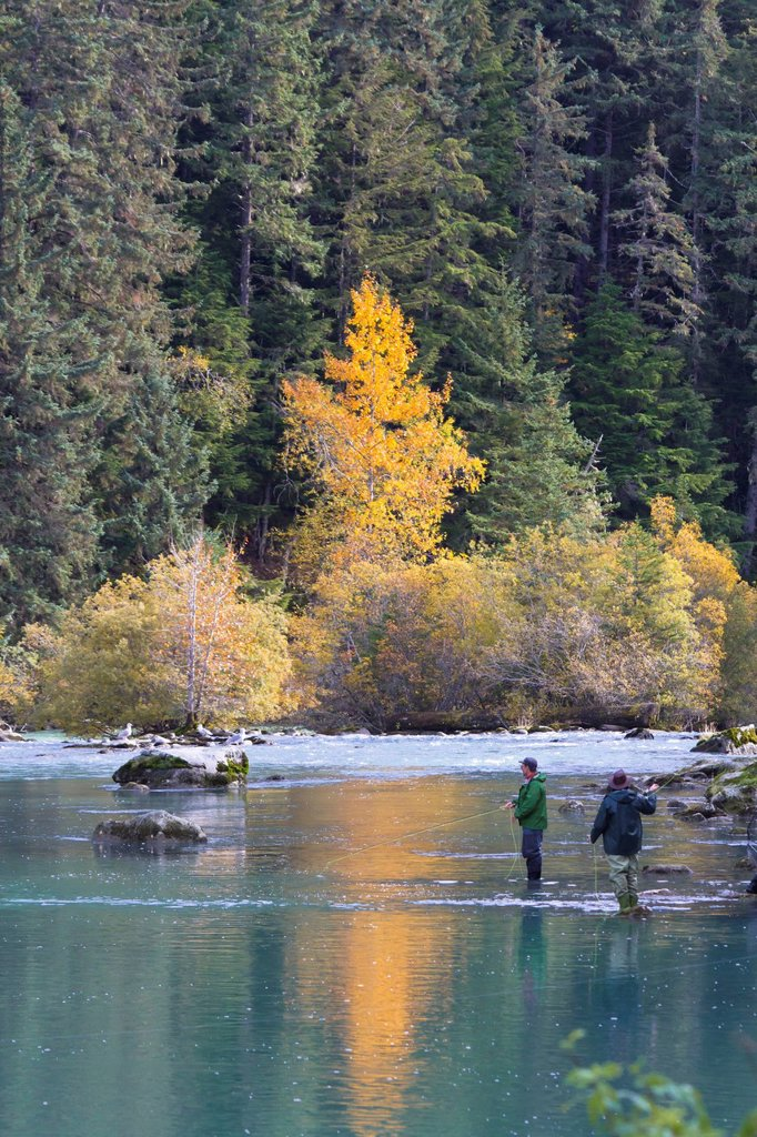 Two fly fisherman fish for salmon in the Chilkoot River near Haines, Southeast Alaska, Autumn : Stock Photo