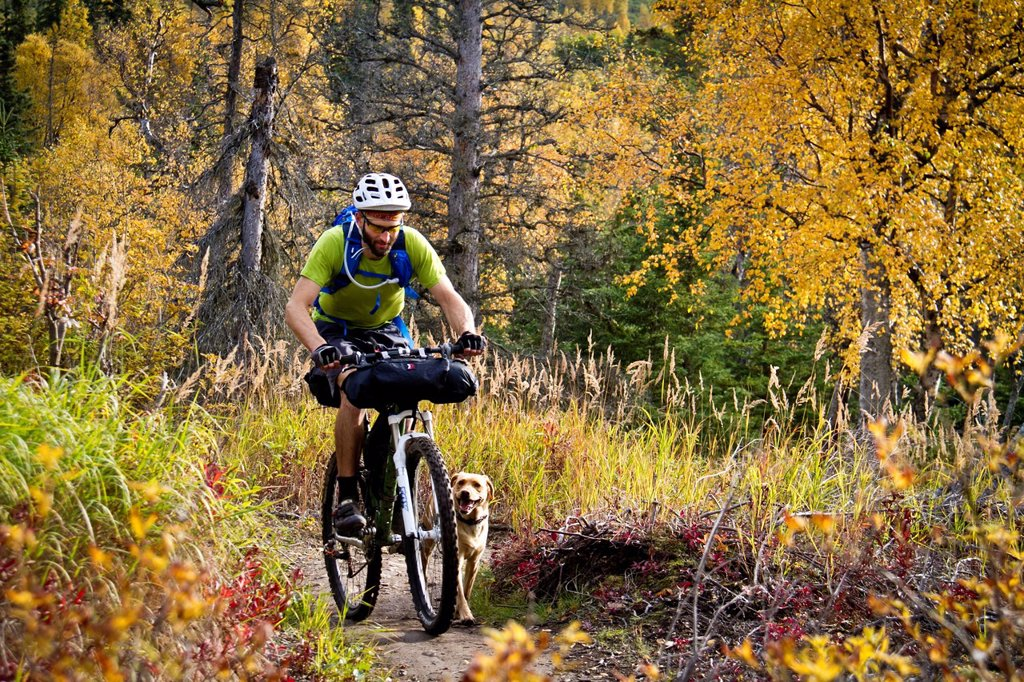 Stock Photo: 4289-14085 Man mountain biking with dog running beside him, Anchorage hillside trails, Southcentral Alaska, Autumn