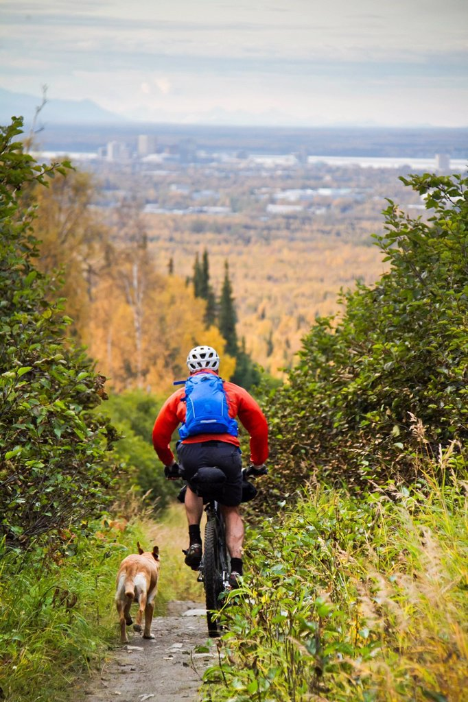 Stock Photo: 4289-14092 Man mountain biking with dog running beside him, Anchorage hillside trails, Southcentral Alaska, Autumn