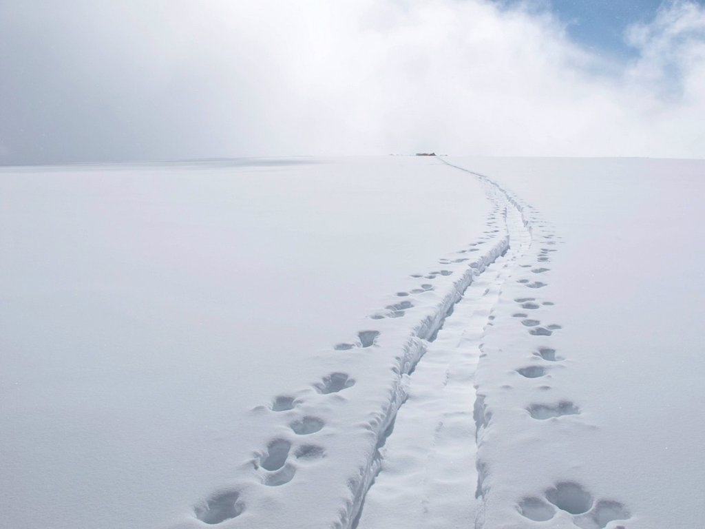 Stock Photo: 4289-14129 Path worn by climbers at Camp 4 while mountaineering the King Trench route on Mount Logan, Kluane National Park, Saint Elias Mountains, Yukon Territory, Canada, Summer