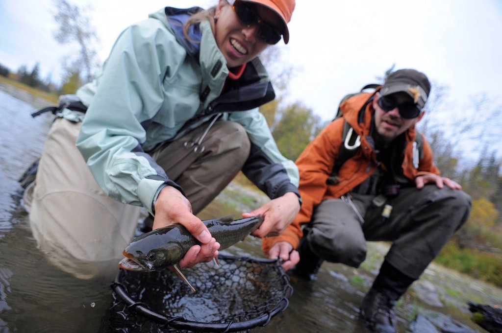 Man and woman kneeling in water to show off a Dolly Varden char caught in Deep Creek, Kenai Peninsula, Southcentral Alaska, Autumn : Stock Photo