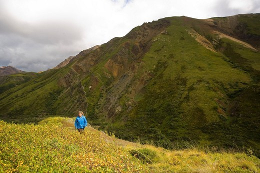 Female hiking on a ridge near Sable Pass in Denali National Park, Interior Alaska, Summer/n : Stock Photo