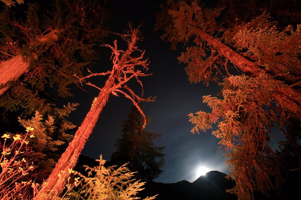 Moon rise scenic in Tongass National Forest at Punchbowl Lake, Misty Fjords National Monument Wilderness, Southeast Alaska : Stock Photo
