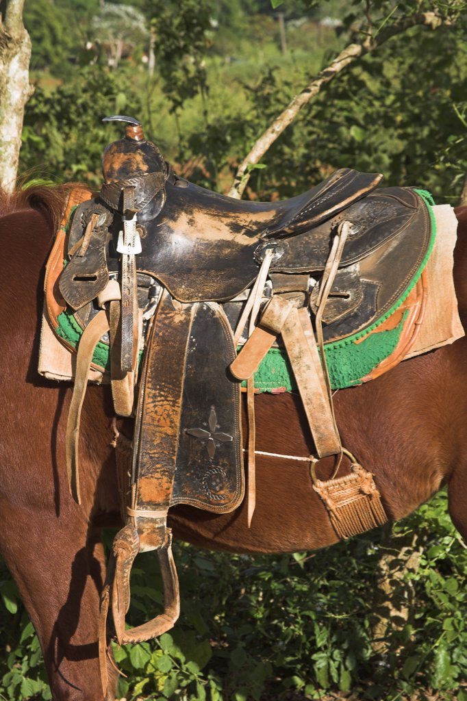 Stock Photo: 4290-2981 A saddle on the back of a horse, Vinales Valley, Pinar Del Rio Province, Cuba