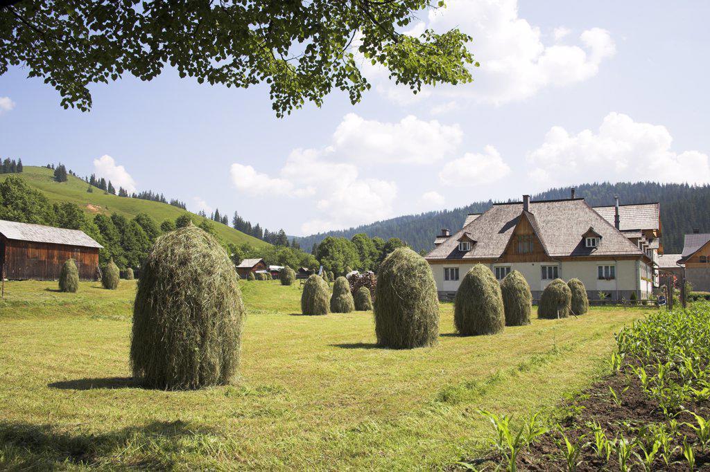 Stock Photo: 4290-3342 Farm house and hay stacks in garden, Moldovita, Southern Bucovina, Moldavia, Romania