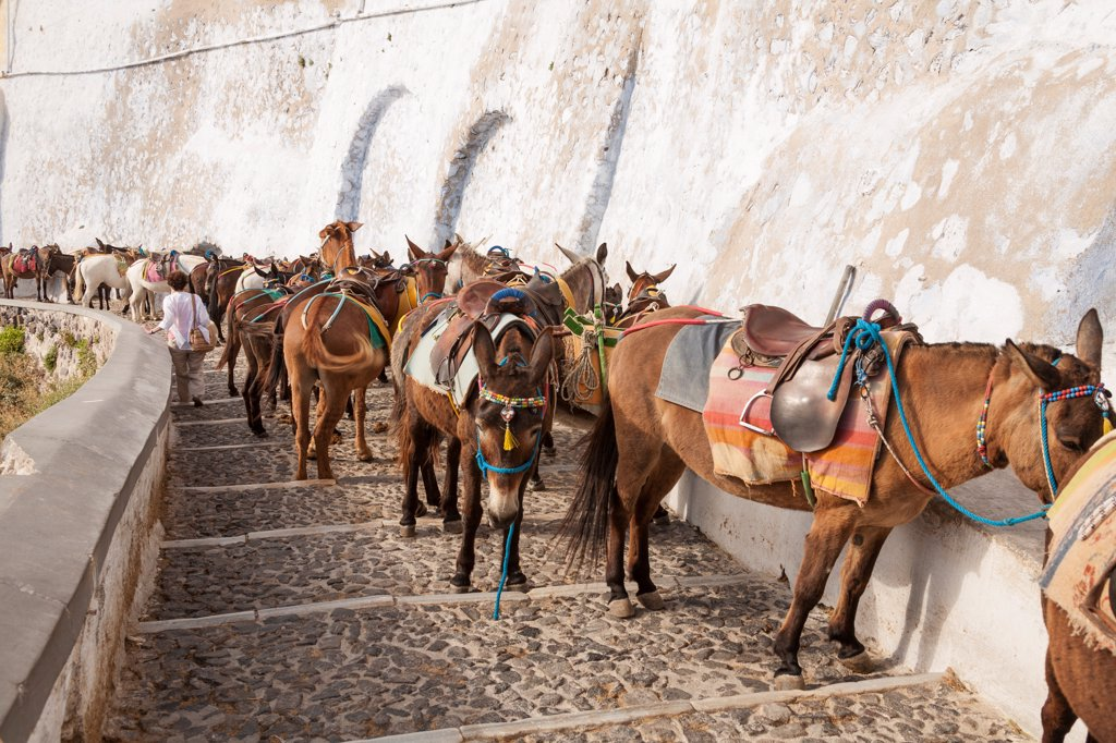 Donkeys on the steps leading down from Fira to Skala, Santorini, Greece : Stock Photo