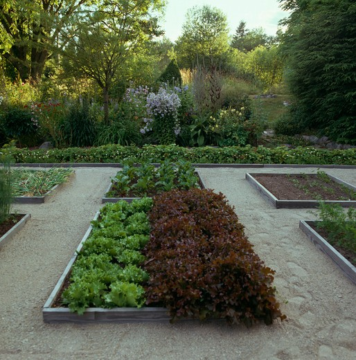 Lettuce in raised beds in formal vegetable garden with frit paths : Stock Photo