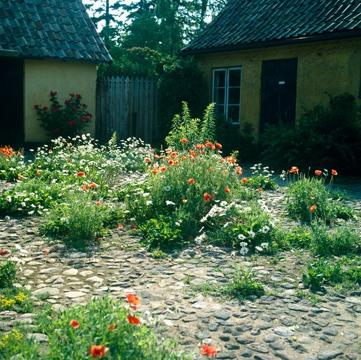 Stock Photo: 4291-10498 Poppies and marguetitesgrowing in a rural Scandinaviancobbled courtyard.
