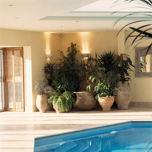 Stock Photo: 4291-11885 Houseplants in modern indoor swimming pool