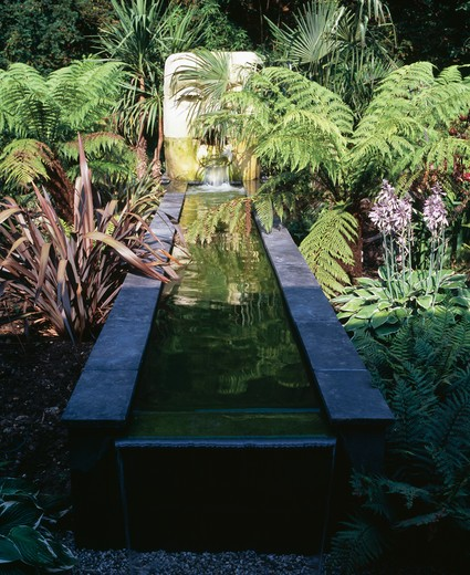 Stock Photo: 4291-16088 Lush green ferns with phormium and hostas growing beside rectangular pool with sculptural water feature