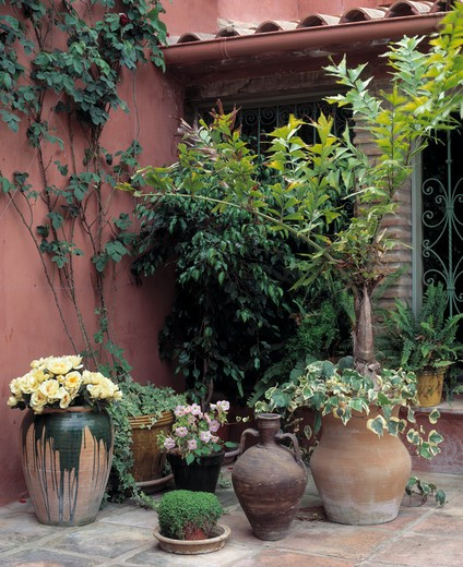 Stock Photo: 4291-19567 Corner of a courtyard with containers with ferns, ivyand begonias