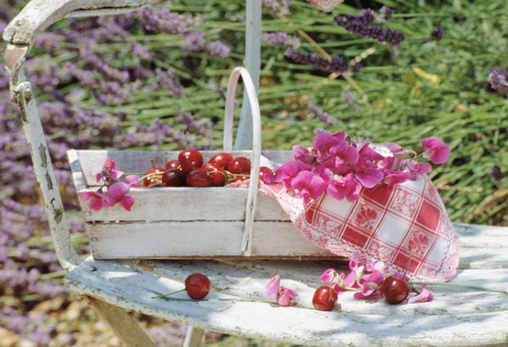 Still-Life of sweetpeas : Stock Photo