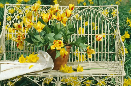 Still-Life of yellow tulips in vase on bench : Stock Photo