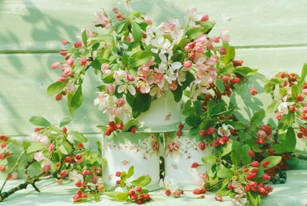 Stock Photo: 4291-22404 Still-Life of apple blossom