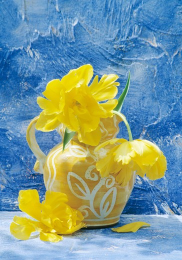 Still-Life of yellow tulips in yellow jug : Stock Photo