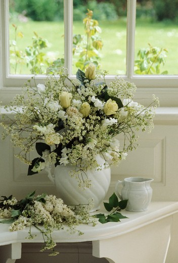 Still-Life of white flowers in jug : Stock Photo