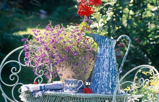 Stock Photo: 4291-22630 Still-life of blue enamel jug and lobelias in terracotta pot on table