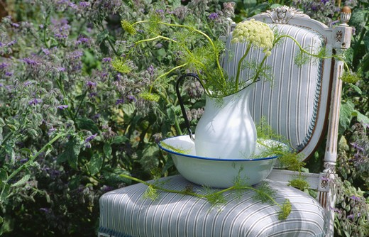 Stock Photo: 4291-22662 Still-life of jug of fennel on pale grey upholstered chair in front of flowering borage