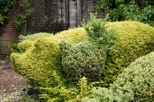 Stock Photo: 4291-23695 Close-up of topiary pig in garden border