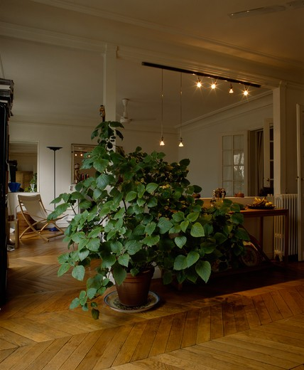 Stock Photo: 4291-25061 Large houseplant on parquet floor in modern apartment living room