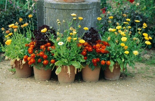 Stock Photo: 4291-3976 Colourful flowering summer plants in pots in country garden