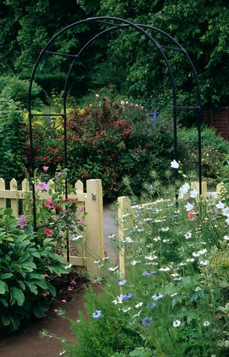 Stock Photo: 4291-4061 Nigella against cream fence with metal arch in large country garden in summer