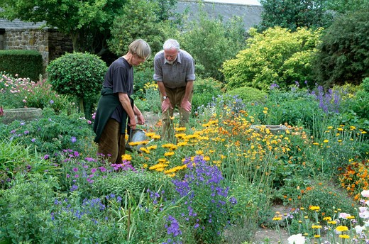 Stock Photo: 4291-4473 Woman watering herbaceous border in country garden with man looking on