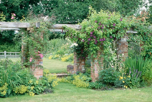 Purple clematis on wooden pergola linking brick wall in large country garden in summer : Stock Photo