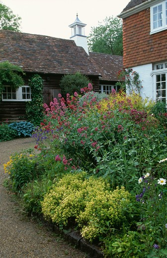 Colourful flowering plants in garden border of traditional country house in summer : Stock Photo