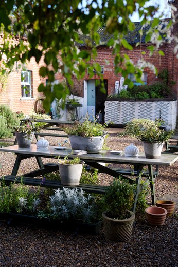 Stock Photo: 4291-5814 Plants in metal containers on table on gravelled courtyard